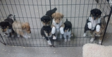 puppy images danced in our heads