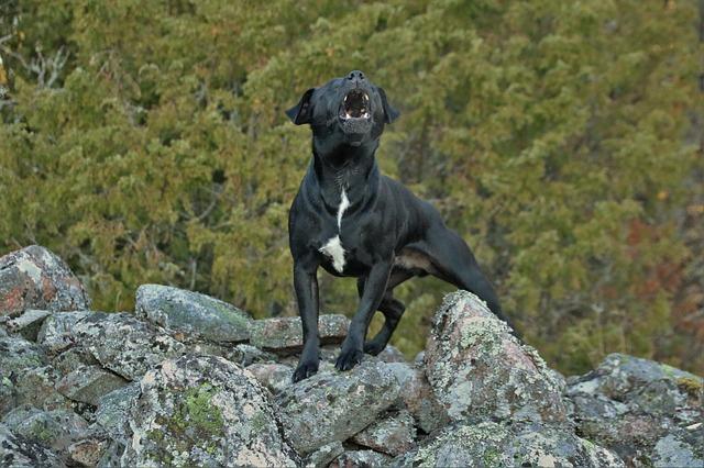 barking dog 2