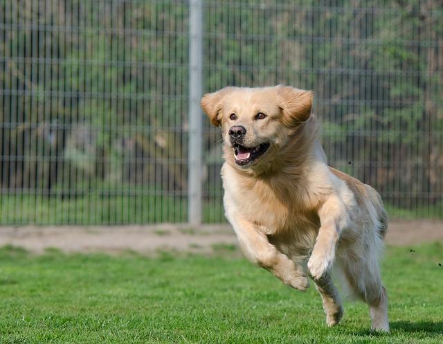 running-dog-dogpark for blog