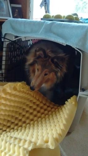 Annie in V's crate