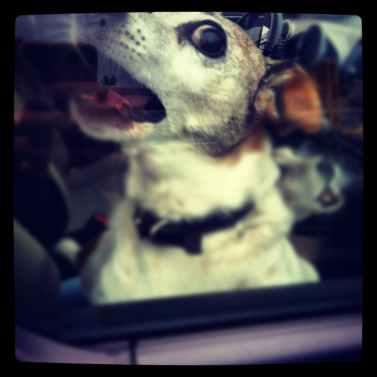 dog car rabies